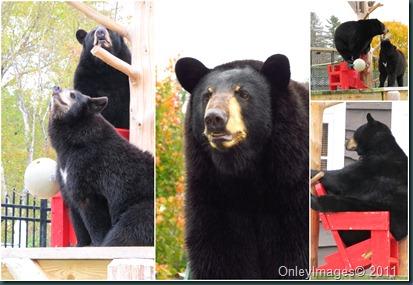 bears NH
