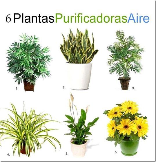 6 plantas que puruficam o ar nos ambientes