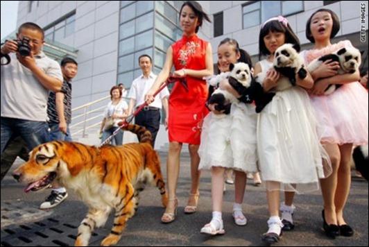eb1319141173dog-tiger-small