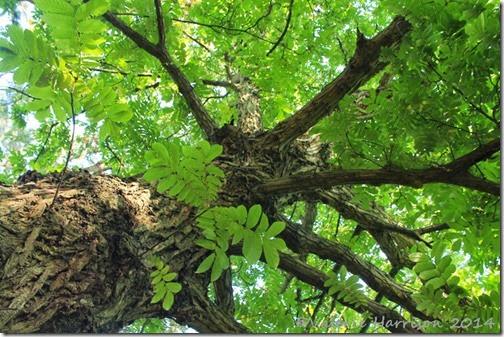 45-tree