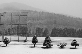 2011-11-16 More snow 004a