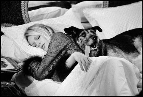 1653_15_BRIGITTE_BARDOT_WITH_DOG_VIEW_03.jpg