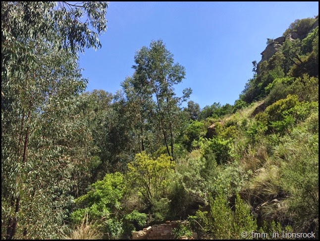 Greenery at Lionsrock