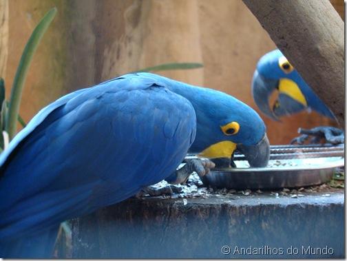 Arara Azul Parque das Aves Foz do Iguaçu BlogTurFoz