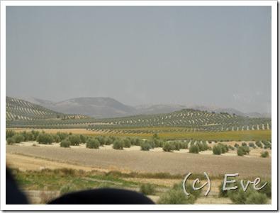 Weltjugendtag Spanien 2011 435