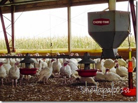 Feed - Feed bin and Turkeys in the barn