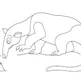 anteater4.jpg