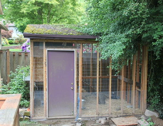 chicken-coop-shed
