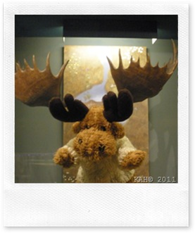 Natural History Museum - #6 - My What Big Horns