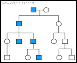 pedigree chart Y linked trait