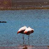 Arica - Parque Nacional Lauca  (2 de 10).jpg