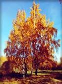 gwenynbore-10-13-2013-15-10
