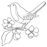 oiseau62.jpg