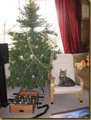 IMG_0520 Christmas Tree