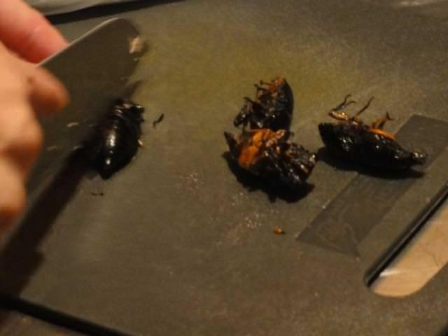 昆虫食イベントに参加した