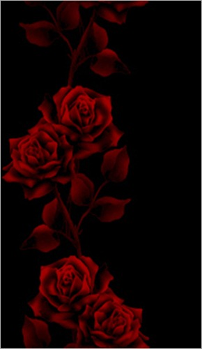 red-roses-black-lovely