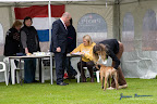 20100513-Bullmastiff-Clubmatch_30845.jpg