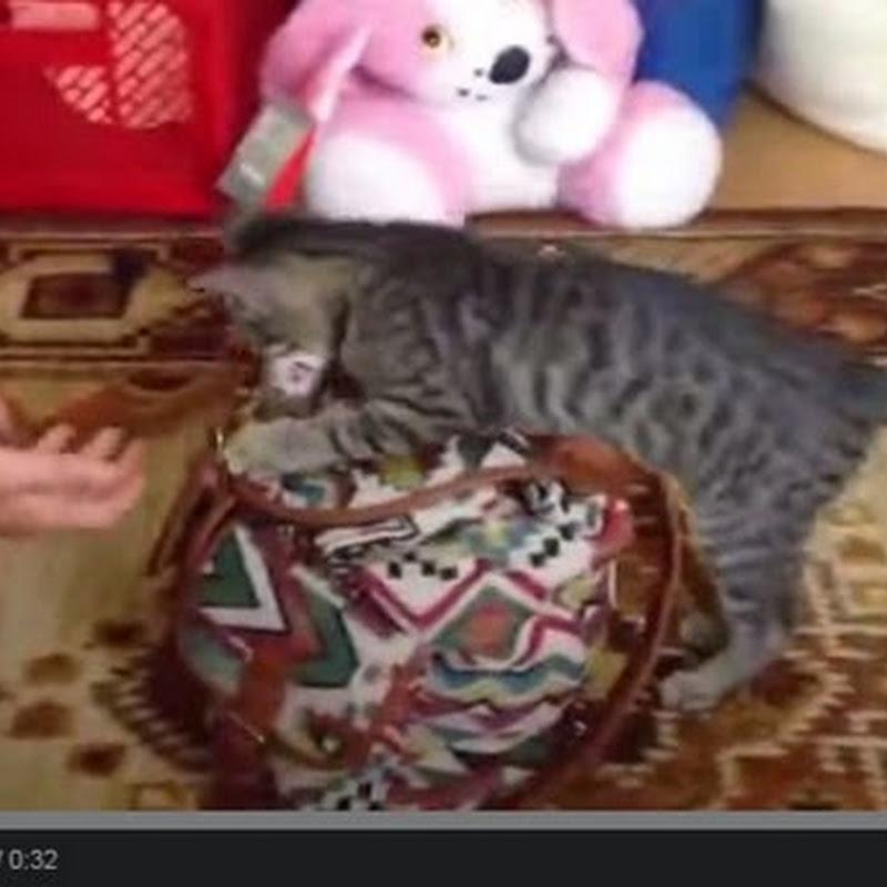 Γάτα νομίζει ότι είναι σκύλος