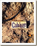 cabbage marker