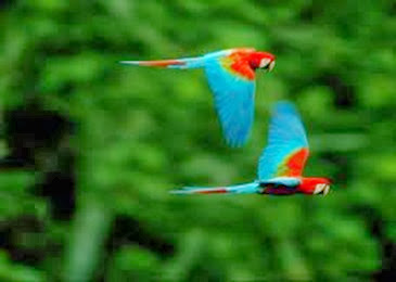 Amazing Pictures of Animals, Photo, Nature, Incredibel, Funny, Zoo, Red-and-green Macaw, ara chloropterus, Bird,  Alex.  (12)