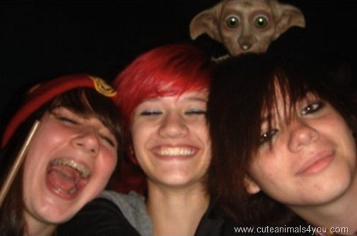 50_Funniest_Animal_Photobombs_Of_All_Time_34