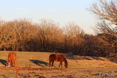 Ashleys Horses