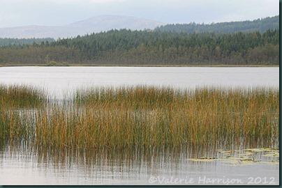 6-reeds