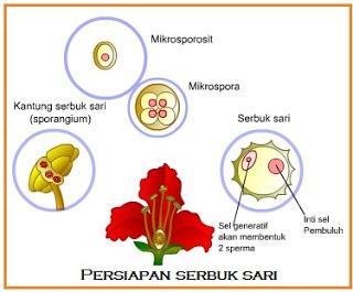 persiapan serbuk sari[1]