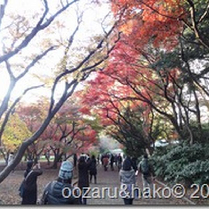hojas coloradas 紅葉