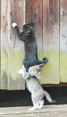 kitty_gives_helping_hand.png (496×333) - Google Chrome (03-02-2013 14.42.44)