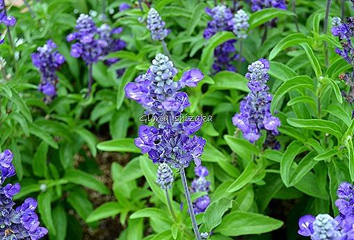 Azul - Glória Ishizaka 7