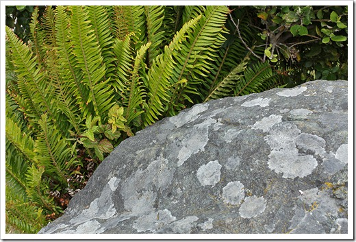 110712_fern_and_rock