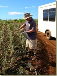 20150121_guide Bret cutting pineapples (Small)