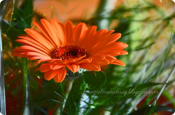 12 12 2012 photochallenge LET IT BLOOM (3)