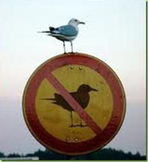 ironic seagull