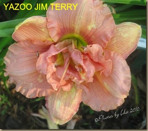 yazoo jim terry.-- (Small)WTMK
