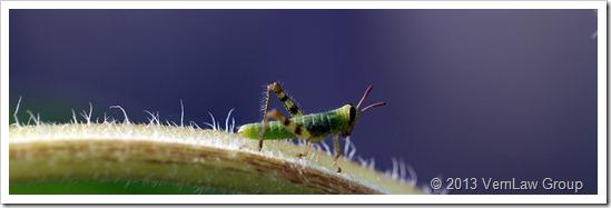 Grasshopper3StrollingIMG_5201