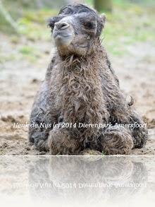 Henk de Nijs (c) 2014 Dierenpark Amersfoort