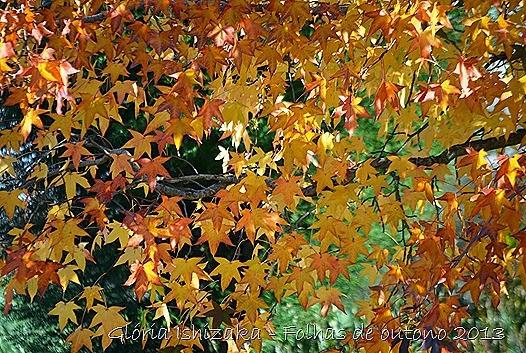 8  Glória Ishizaka - Folhas de Outono 2013