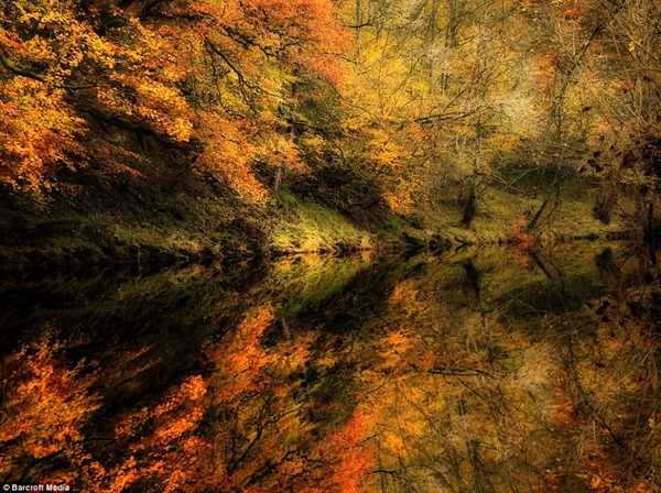 Mr Merrifield's dramatic and richly-coloured image of trees hanging over the water at Bolton Abbey