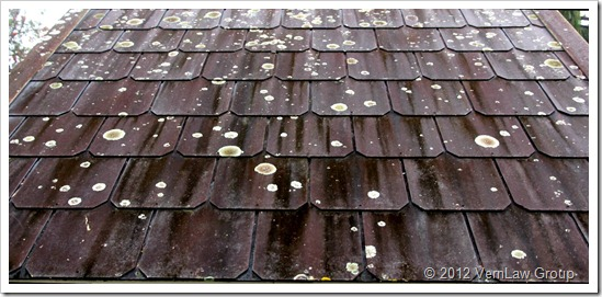 RooftopLichenIMG_5944