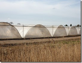 2 polytunnels hademore