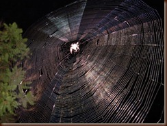 800px-SpiderWeb - Copy
