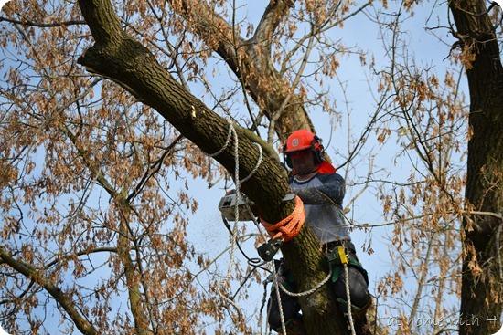treetrimming_cut2_athomewithh