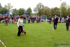 20100513-Bullmastiff-Clubmatch_30868.jpg