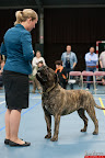 20130510-Bullmastiff-Worldcup-0730.jpg