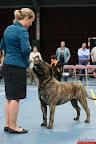 20130510-Bullmastiff-Worldcup-0730.jpg