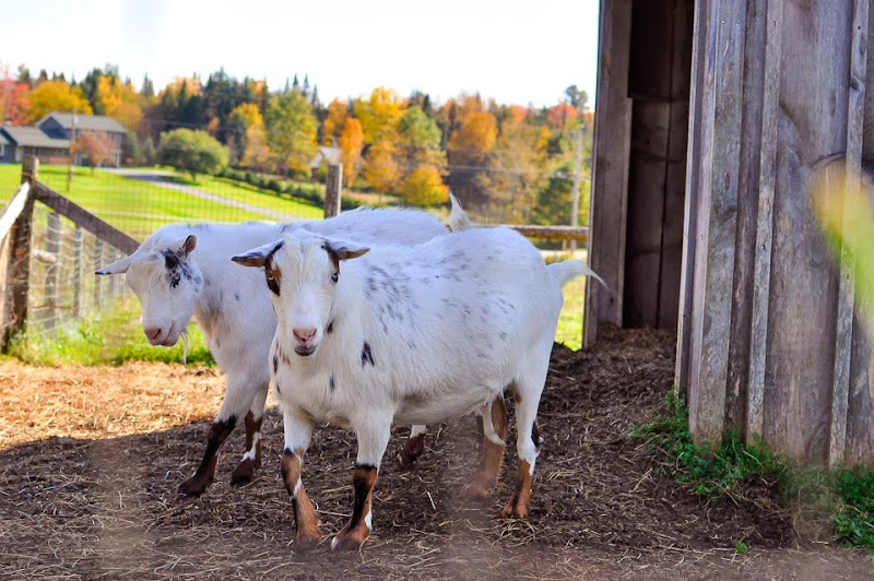 bragg farm-9298
