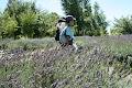 その者、青き衣をまといて、金色の野に降りたつべし、、紫でした