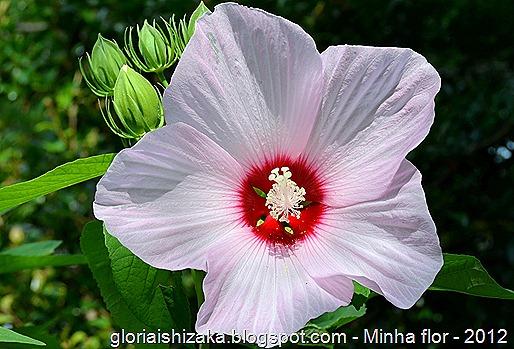 Glória Ishizaka - minhas flores - 2012 - 5